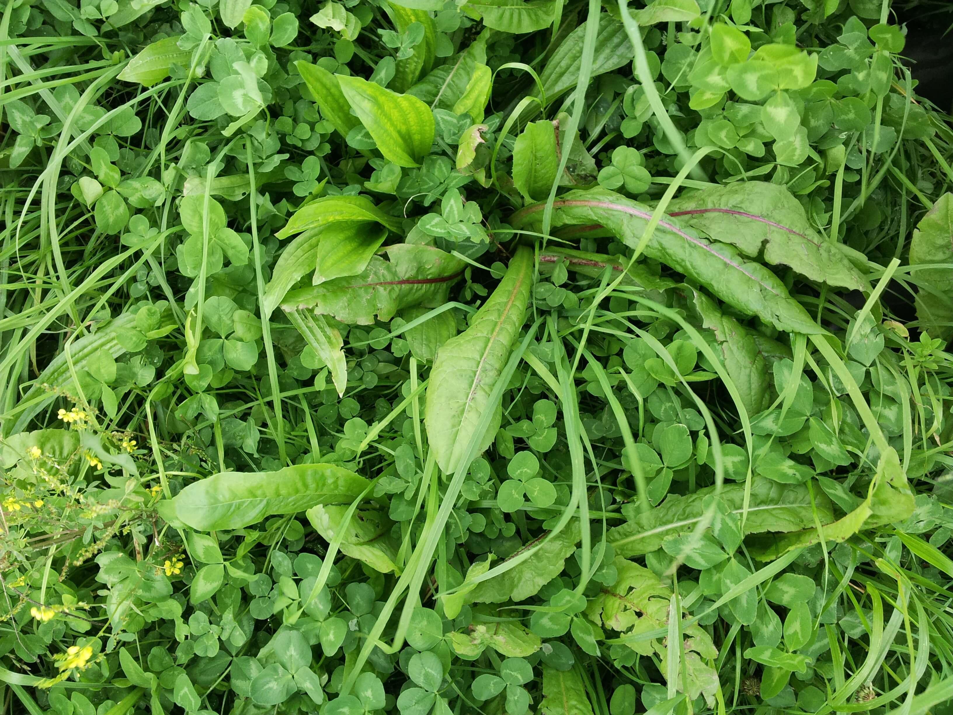 Saladebuffet Kleigrond (1/2 ha)