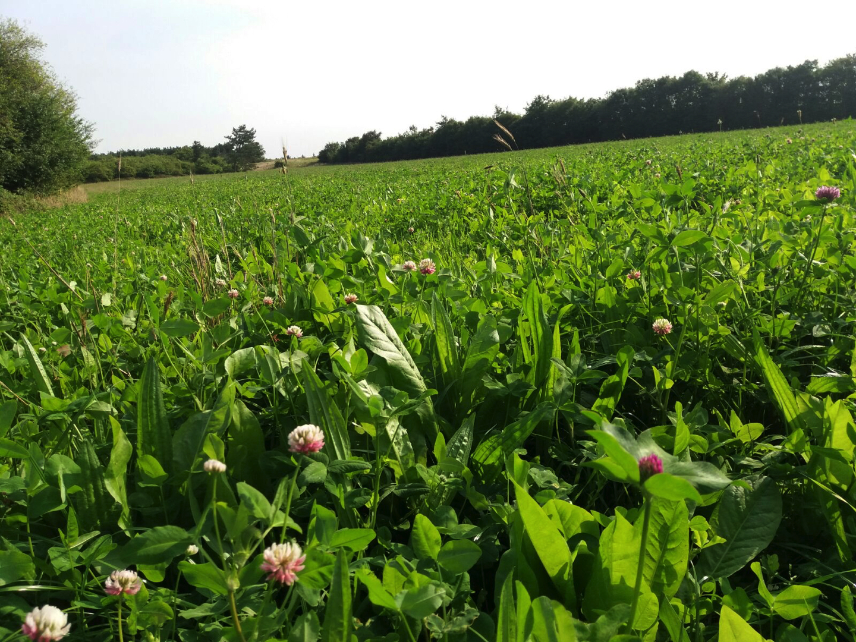 Saladebuffet Kruidenrijk (1/2 ha)