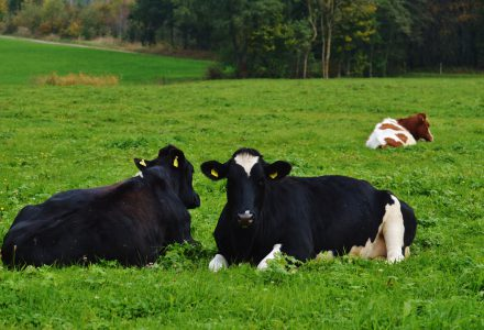 Dairy Farm l Natuurlijk Werken l Pure Graze l Februari 2015