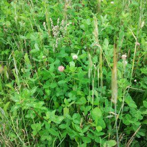 Hoge biodiversiteit met Saladebuffet Zandgrond