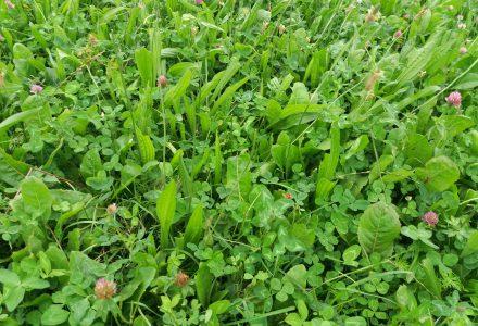 Kruidenrijk-grasland l Pure Graze l Boerenvee April 2014